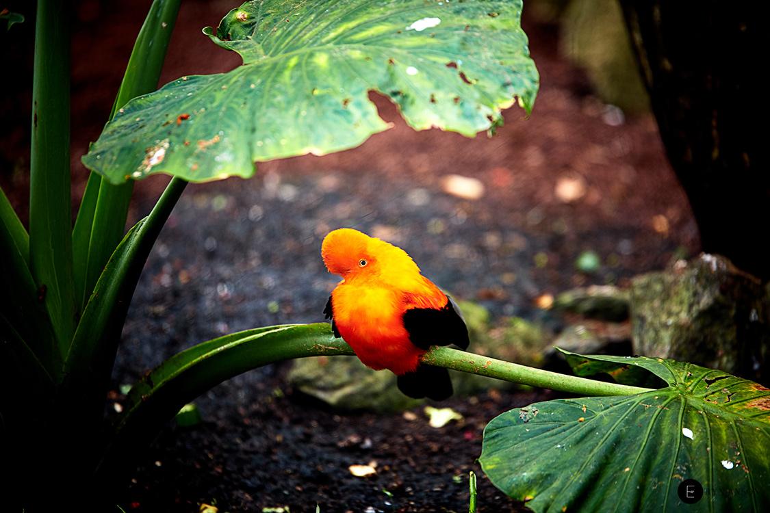 Oiseau coloré - Beauval